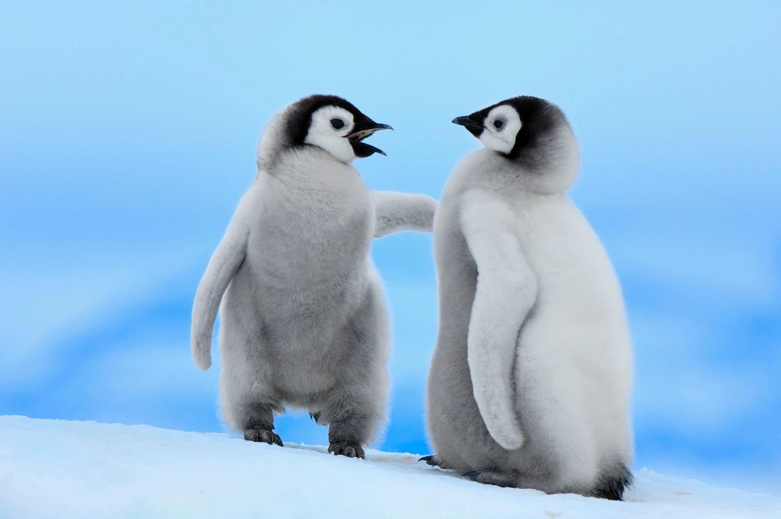 Bien-aimé Adotta un Pinguino - Sostieni il WWF Italia YA23